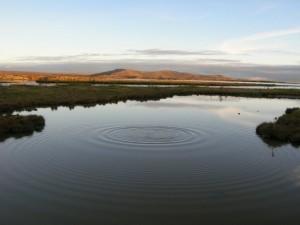 Icelandic Spring Water