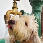 battersea water cooler keeps dog hydrated